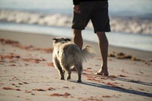 Dogwalkbeach2