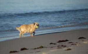 Dogwalkbeach3